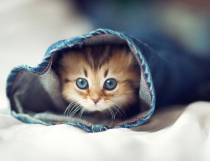 worlds-cutest-kitten-daisy-1