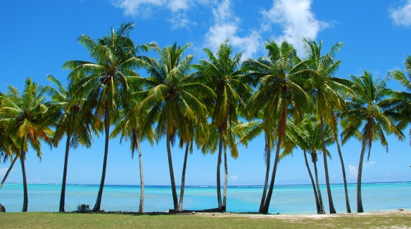 palm-trees-beach.jpg